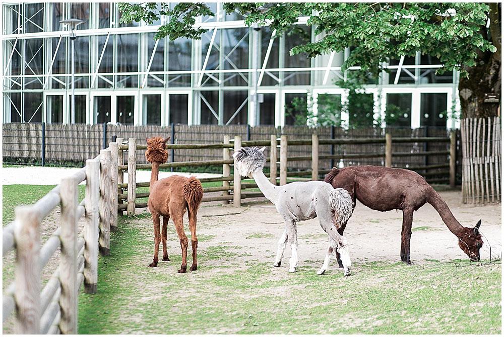 Fotosession Stadtgarten Karlsruhe katrinandsandra-0043