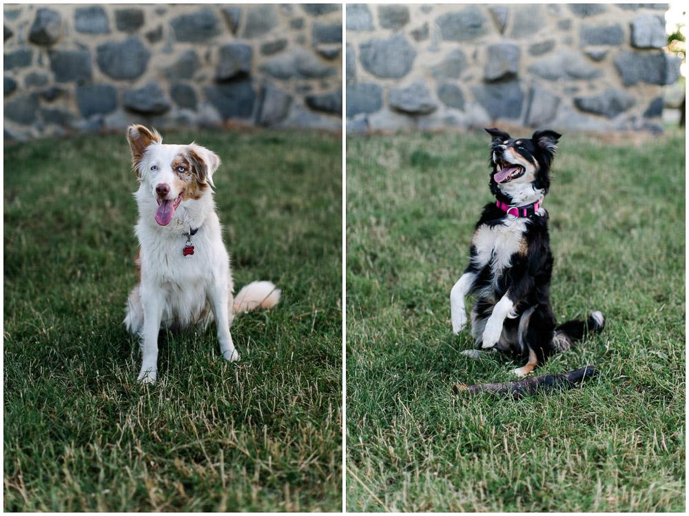 Verlobungsfotos mit Hunden_katrinandsandra-003