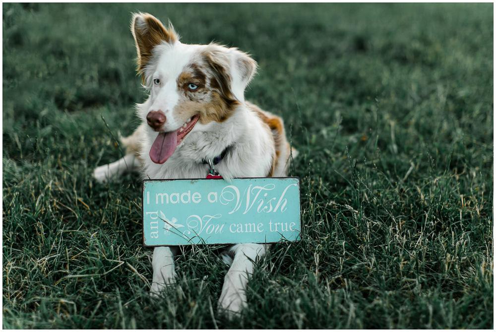 Verlobungsfotos mit Hunden_katrinandsandra-005
