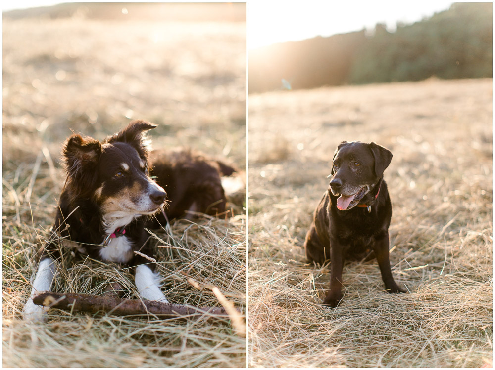 Verlobungsfotos mit Hunden